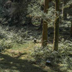 Mieux accueillir le public à l'arboretum de la Jonchère-Saint-Maurice