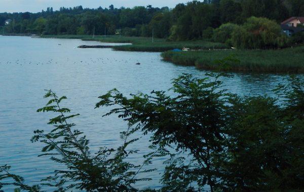 Un nouvel observatoire ornithologique au bord du lac Léman