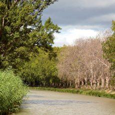 Sauvegarde du patrimoine arboré du canal du Midi